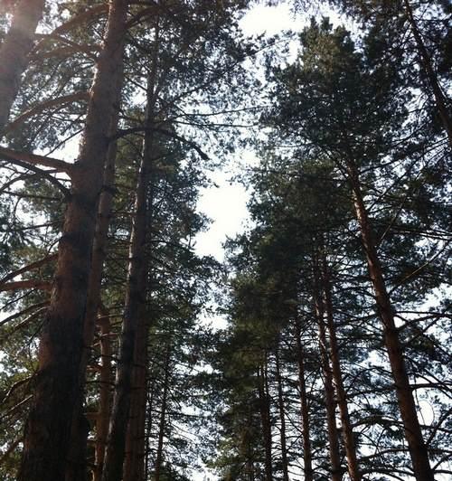 Najbolji lek protiv depresije – šuma