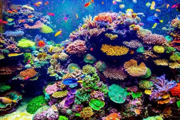 Fluorescentni korali koji su šokirali naučnike