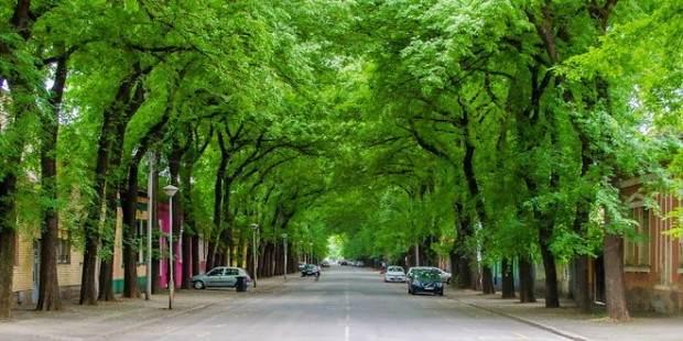 Kikinda i njena ulica među najlepših 50 na svetu