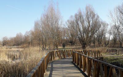 Predlog za porodični izlet u prirodu – Kopački rit